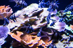 Lively colorful aquatic life in dark display aquarium royalty free stock photo