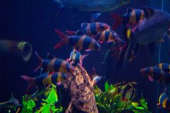 Lively colorful aquatic life in dark display aquarium stock image