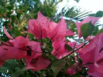 Lively flower. Snapped with a smartphone camera Royalty Free Stock Images