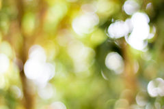 Lively Green brown blur background Stock Photo