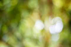 Lively Green brown blur background with bokeh Stock Photo