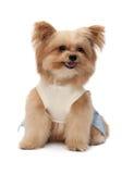 Lively Mixed Breed Dog Royalty Free Stock Photos