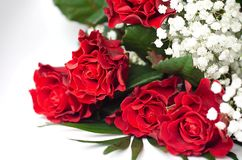 Lively red isolated roses with white gypsum. And sprigs of ferns royalty free stock image