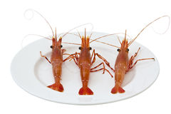 Lively Shrimp Royalty Free Stock Photography