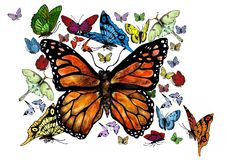 Lively Swarm of Butterflies Royalty Free Stock Photos