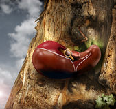 Liver. Abstract photo of a human liver growing out of a tree trunk Royalty Free Stock Image