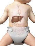The liver of a baby Royalty Free Stock Photo