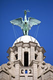 Liver Bird Perched on the Royal Liver Building Stock Photos