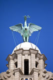 Liver Bird Perched on the Royal Liver Building. A Liver Bird statue perched ontop of the Royal Liver Building in Liverpool royalty free stock photo