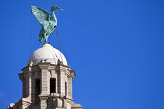 Liver Bird Perched on the Royal Liver Building. A Liver Bird statue perched ontop of the Royal Liver Building in Liverpool royalty free stock images