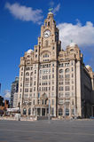 Liver Building Royalty Free Stock Image