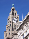 Liver building Stock Images