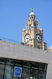 The Liver Building Clock Tower, Liverpool. Stock Images