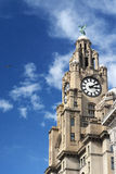 Liver building Liverpool. The clock tower in the Liver Building Liverpool stock photos