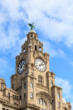 The Liver Building Stock Photos