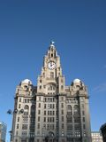 Liver Buildings royalty free stock photo