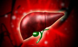 Liver Royalty Free Stock Photography