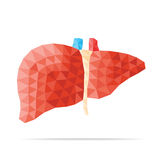Liver faceted. Illustration of human liver with faceted low-poly geometry effect, vector Stock Photos