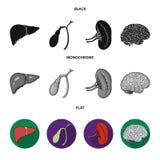 Liver, gallbladder, kidney, brain. Human organs set collection icons in black, flat, monochrome style vector symbol. Stock illustration Stock Image