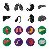 Liver, gallbladder, kidney, brain. Human organs set collection icons in black,flet style vector symbol stock. Illustration Royalty Free Stock Image