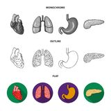 Liver, gallbladder, kidney, brain. Human organs set collection icons in flat,outline,monochrome style vector symbol. Stock illustration Royalty Free Stock Photos