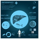 Liver Infographic Infocharts Royalty Free Stock Image