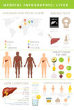 Liver infographic royalty free illustration