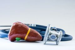 Liver near the stethoscope as a symbol of a health of organ, care, diagnostics, medical testing, treatment and prevention of disea. Ses and pathology of the royalty free stock photos