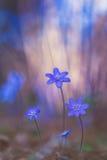 Liverleafs hermosos en la primavera imágenes de archivo libres de regalías
