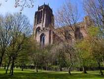 Liverpool Anglican Cathedral. A view of Liverpool Anglican Cathedral through the trees of St James Cemetery Stock Image