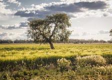 Liverpool plattar till jordbruks- landskap Fotografering för Bildbyråer