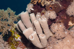 Liveschwamm Unterwasser lizenzfreie stockfotografie
