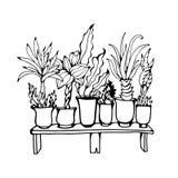 Liveskizze von Zimmerpflanzen in den Töpfen Stockfoto