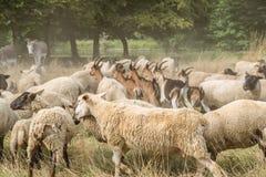livestock fotografia de stock