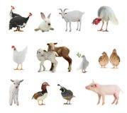 livestock imagens de stock