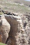 Botan Valley, Siirt,Southeastern Anatolia.Turkey. Livestock in Botan valley, Siirt province,Turkey Royalty Free Stock Image