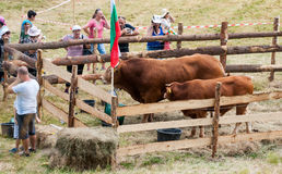 Livestock Exhibition at the Folklore Festival of Rozhen-2015 Royalty Free Stock Photography