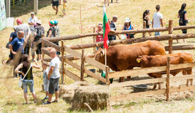 Livestock Exhibition at the Folklore Festival of Rozhen Stock Photo