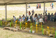 Livestock Exhibition at the Folklore Festival of Rozhen-2015 in Bulgaria Royalty Free Stock Photography