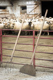Livestock farm Stock Photos