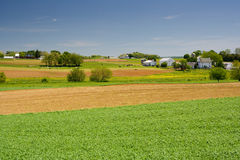 Livestock Farm in Pennsylvania Royalty Free Stock Photography