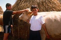Livestock farming in Kosovo. Stock Photos