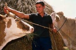 Livestock farming in Kosovo. royalty free stock image