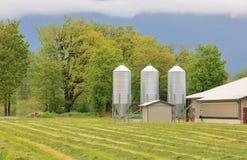Livestock Grain Feeding Silos. Three livestock grain silos stand beside a cluster of trees in a rural farming area stock image
