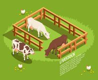 Livestock Isometric Composition Stock Photography