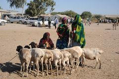 The livestock market Royalty Free Stock Image