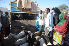 The livestock market Stock Image