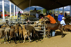 Livestock market, Zaachila Royalty Free Stock Photography