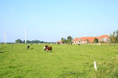 Livestock on a pasture in Wangerland, Friesland, Lower Saxony, Germany. Scenic landscape in Wangerland, farm and pasture in Friesland, Lower Saxony, Germany Royalty Free Stock Photos