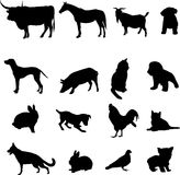 Livestock and poultry. These animals are mankind's faithful friend and lovely partner Stock Photos